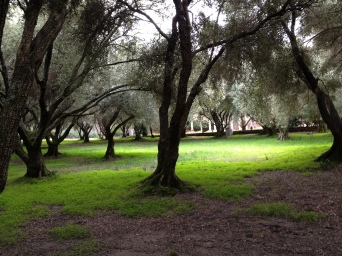The quiet in the olive grove near the parking lot is incredibly peaceful.