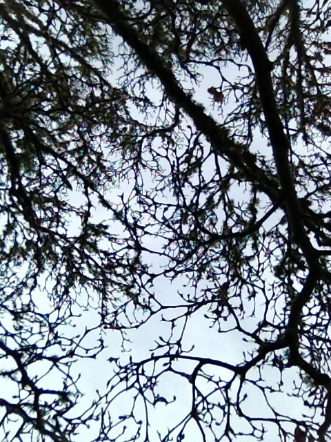 Looking up into the canopy of winter branches.