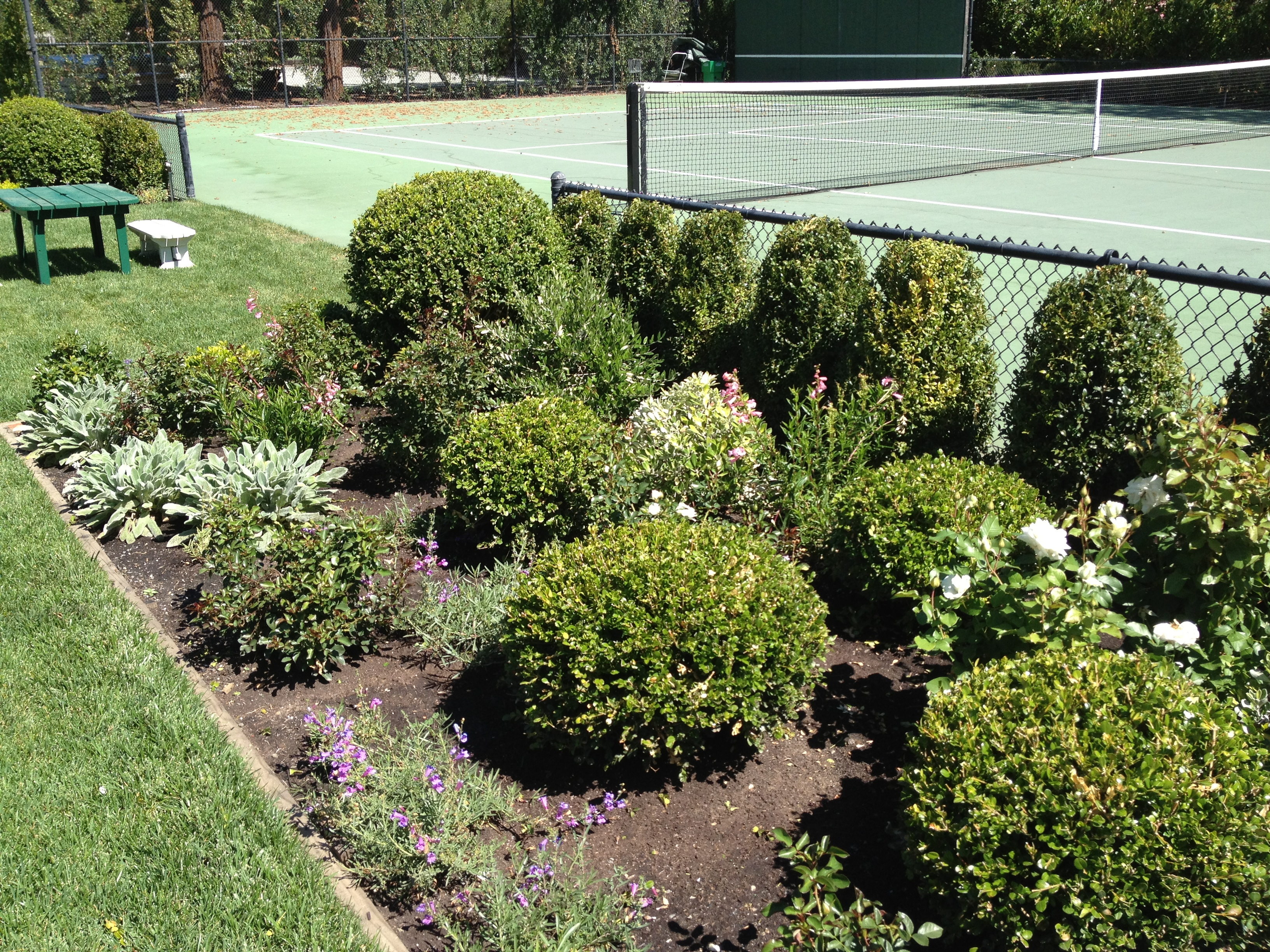 Know when it s time to go success through succession for Typical landscaping plants